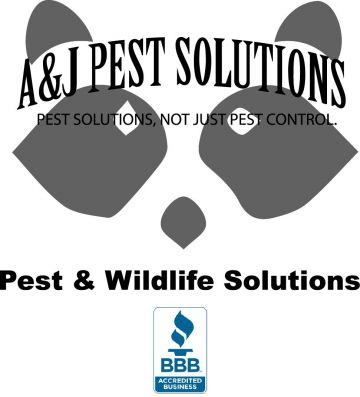 Pest Control For Less